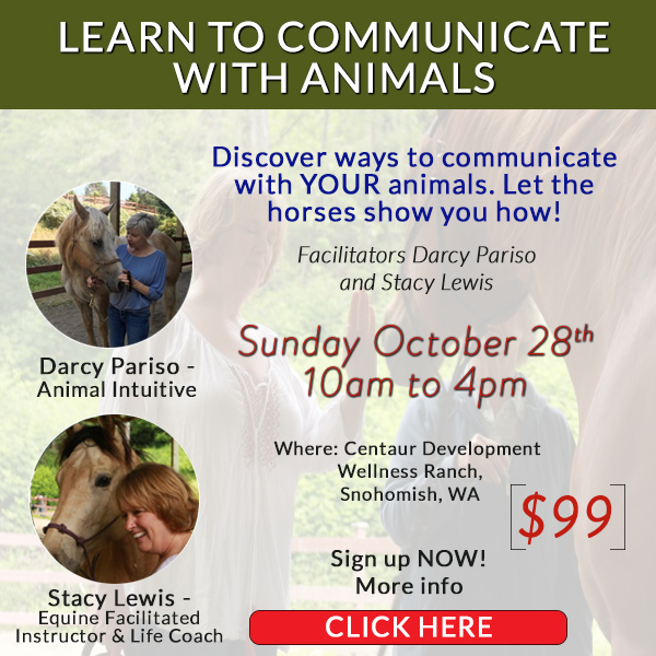 darcy pariso workshop - learn to communicate with animals -equine therapy october 28th
