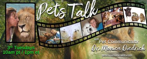 Pets Talk: with Pet Communicator Dr. Monica Diedrich: When animals are sick. . .